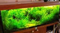 Dekoration im Aquarium Amazonas  nur noch Beispiel