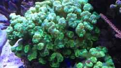 Aquarium Wohnzimmerriff (nur noch als Beispiel)