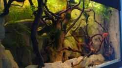 Aquarium Procambarus Clarkii (nur noch als Beispiel)