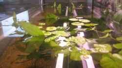 Aquarium SüdOst Asien 375L Wohnzimmer (nur noch Beispiel)