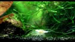 Besatz im Aquarium Nelenisland