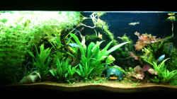 Aquarium Stand 24-04-10_vorne