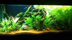 Aquarium Stand 24-04-10_hinten