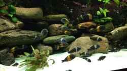 Besatz im Aquarium Tanganjika zu Hause
