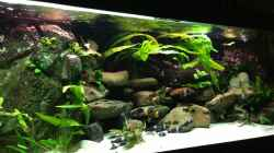 Aquarium Tanganjika zu Hause