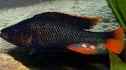 Besatz im Aquarium Becken 16656