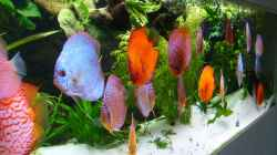 Dekoration im Aquarium Becken 16666