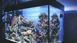 Aquarium Riffaquarium