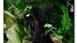 alter Baum in frischem Grün 22.03.13