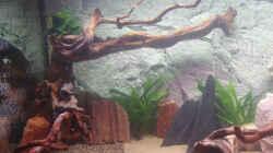 linke Seite mit Wasser und ersten Pflanzen