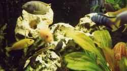 Aquarium Becken 17