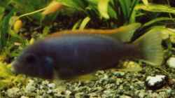 Besatz im Aquarium Becken 17