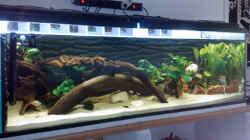 Aquarium Becken 17075