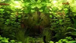 Aquarium Green