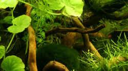 Dekoration im Aquarium Green