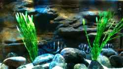 Aquarium Meins
