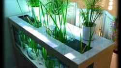 Neugebaute Abdeckung - Wuchs-Öffnungen für emerse Pflanzen (29.07.2012))
