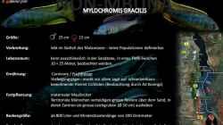 Artentafel - Mylochromis gracilis