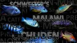 Besatz im Aquarium malawi cane brake (nur noch als Beispiel)