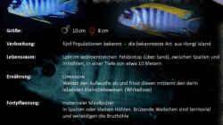 Besatz im Aquarium Mbuna Becken (nur noch als Beispiel)
