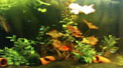 Aquarium Juwel-aquarium Rio 240