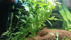 Aquarium Eheim complete set 60