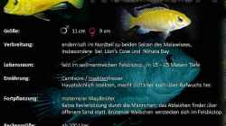 Besatz im Aquarium Maleri Islands