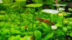 Besatz im Aquarium 375l Riparium