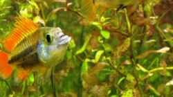 Besatz im Aquarium mysteryland