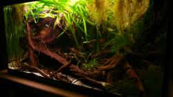 Aquarium 133er