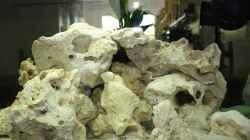 Dekoration im Aquarium Schwichtis Mbuna Tank