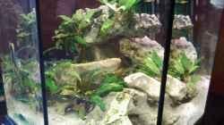 Aquarium 8 Eck