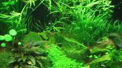 Dekoration im Aquarium Becken 17586