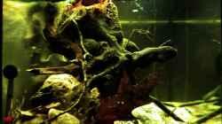 Aquarium Tabasco Fischland