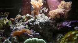 Besatz im Aquarium Fluval Nanoriff