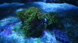 Besatz im Aquarium Flev´s MeWa Tank