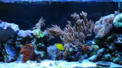 Aquarium Flev´s MeWa Tank