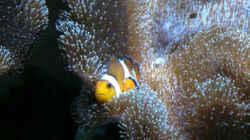 Heimat meiner Nemos die übernommen worden sind. Die leben seit Anfang an dadrin