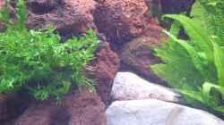 Pflanzen im Aquarium Trigon 190