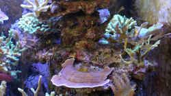 Kleine Riffsäule links