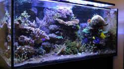Aquarium The Black Island Reef Obsolete
