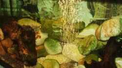 Aquarium Sulawesitreff