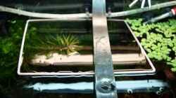 Strohhalmabsperrung für Schwimmpflanzen
