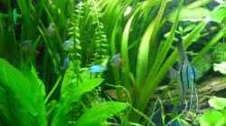 Dekoration im Aquarium Tropic Dream