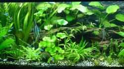 Aquarium Tropic Dream