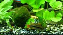 Besatz im Aquarium Tropic Dream