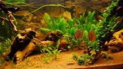 Besatz im Aquarium Nur noch als Bsp.