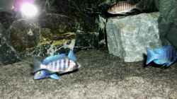 Besatz im Aquarium The Fortress