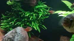 Pflanzen im Aquarium Becken 18144