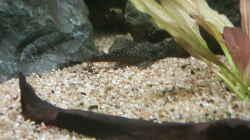 Besatz im Aquarium Becken 18144